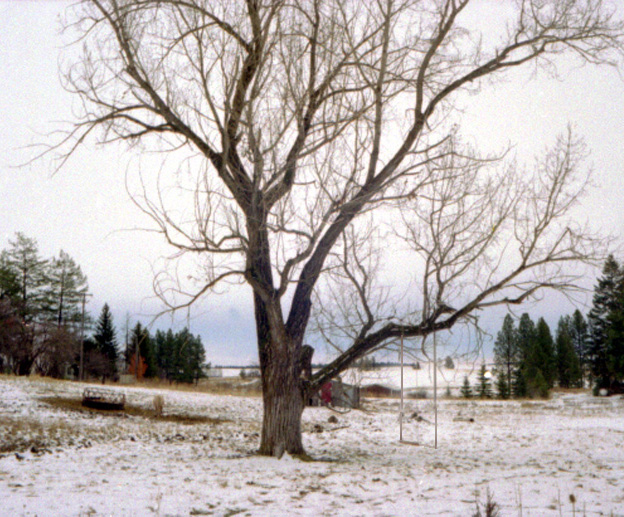 tree swing in Reubens,Idaho, Pop. 80